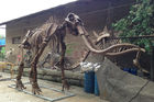 Sunproof Fiberglass Dinosaur Skeleton For Large Entertainment Venue Decoration