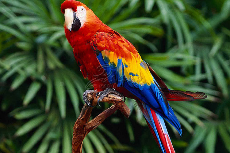 Animatronic Scarlet Macaw With Hairy , Life Size Models Of Animals